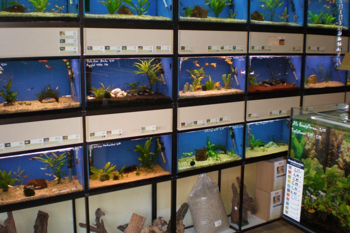Aquaristik Fachgeschäft