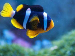 Meerwasser Aquarium Fische