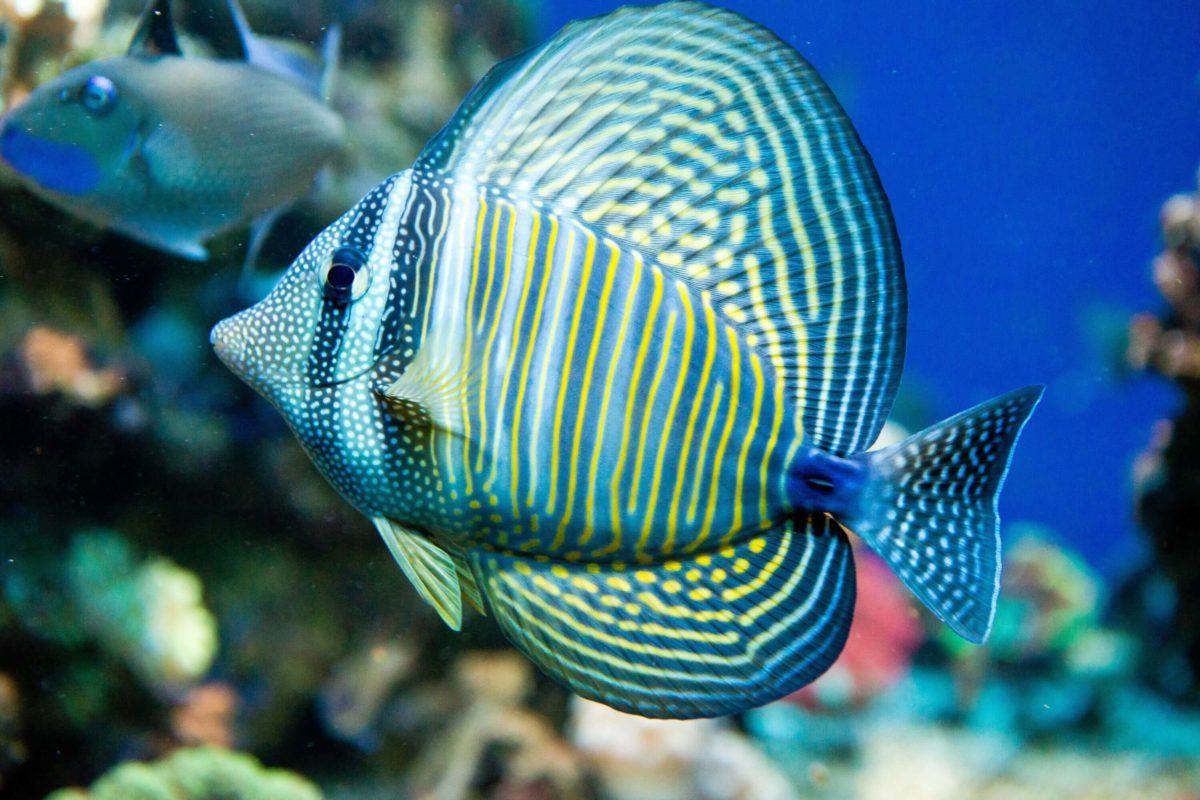 Meerwasser Aquarium Shop