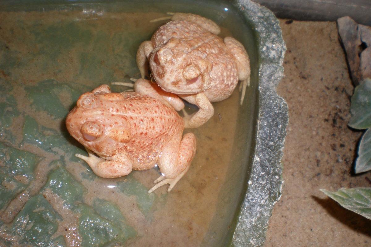 Amphibien Zoo Fachgeschäft Kassel