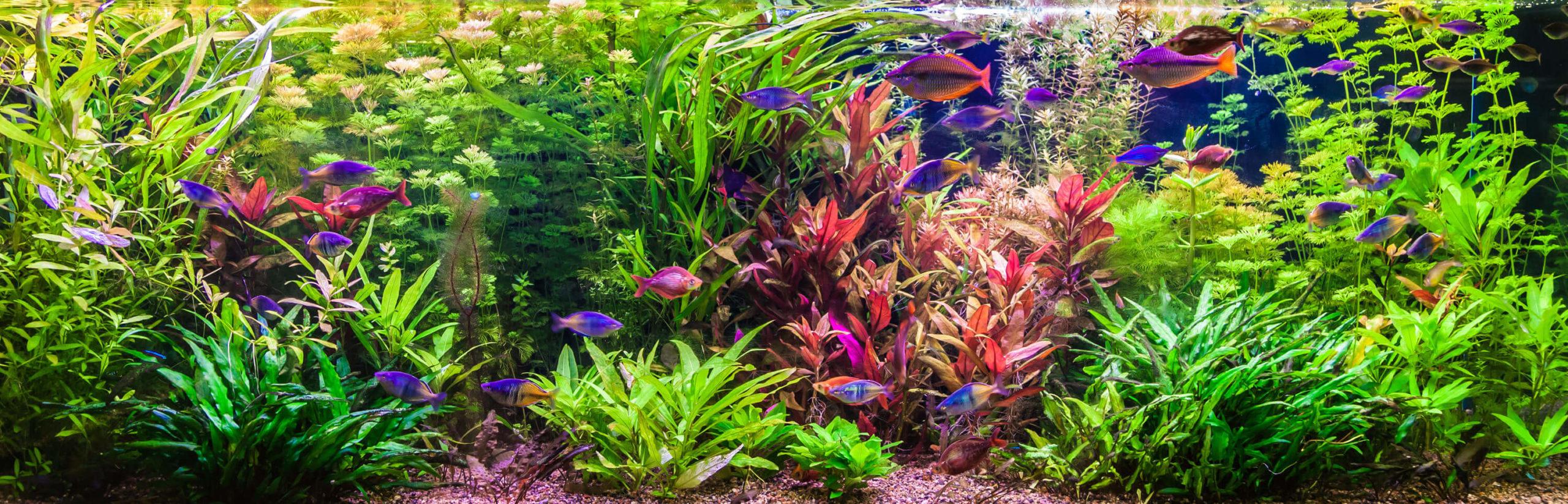 Aquarium Zubehör