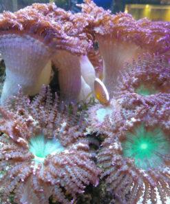 Meerwasser Aquarium Fachgeschäft