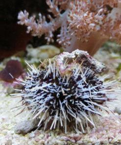 Meerwasser Aquarium Produkte