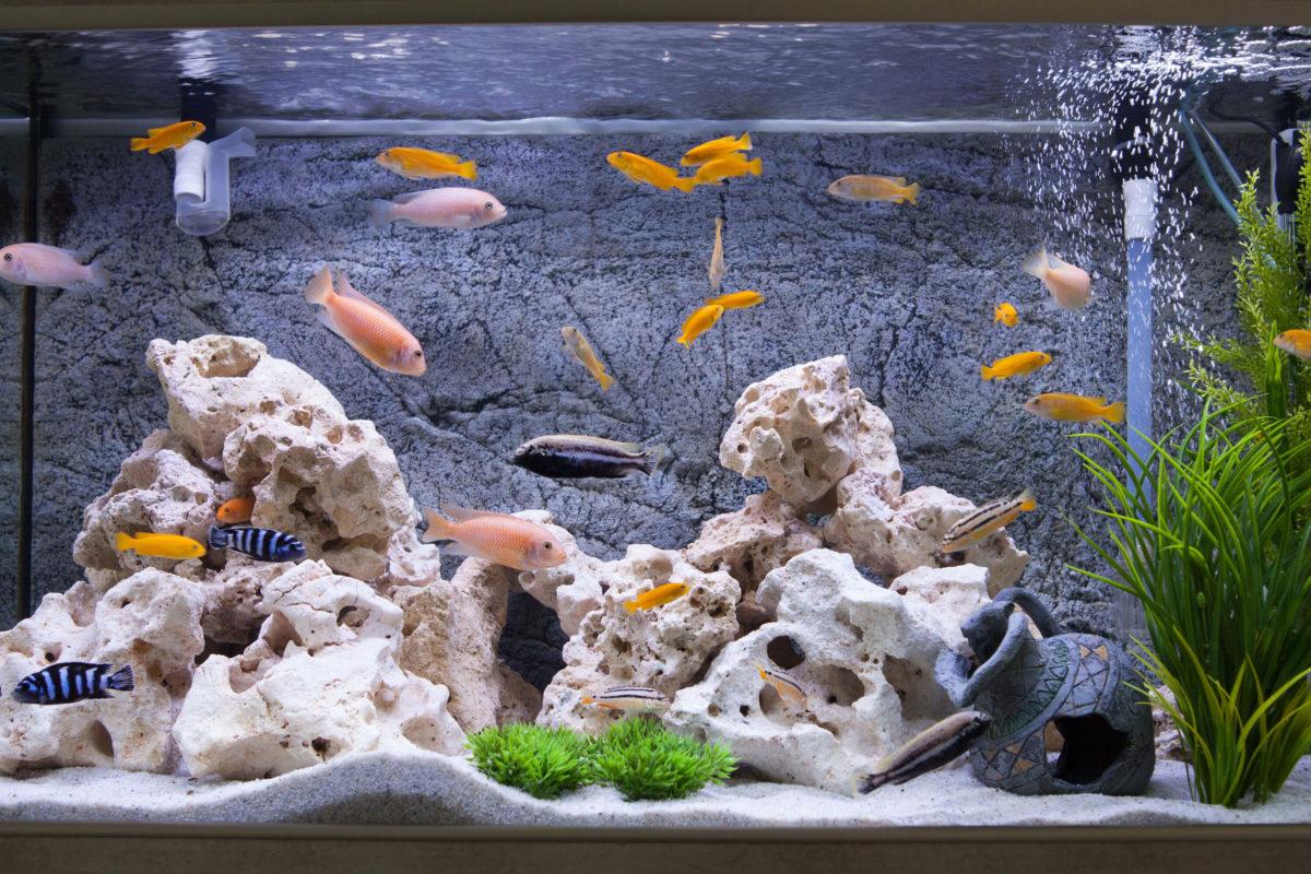 Süsswasser Aquarium Kaufen