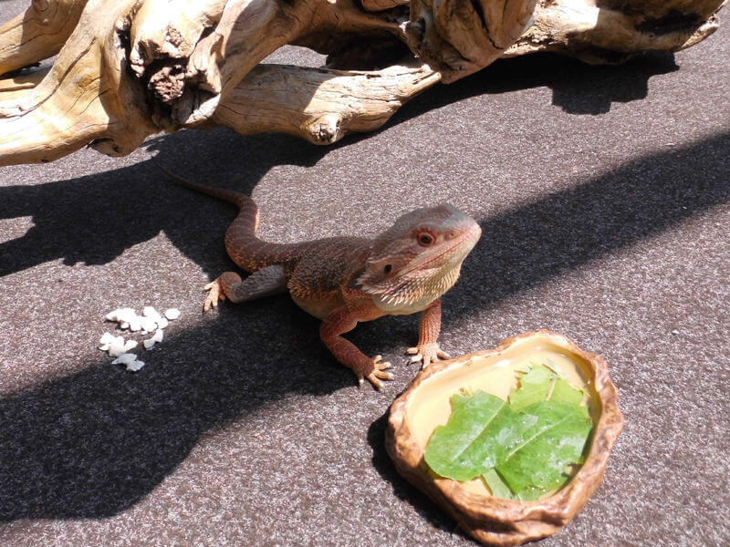 Urlaubspflege für Reptilien
