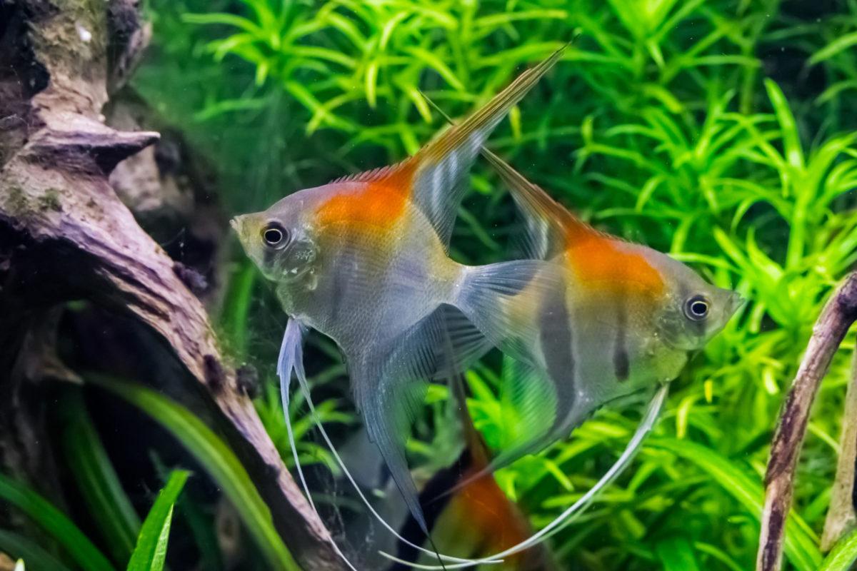 Zierfische Aquarium