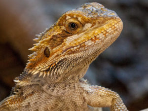 Reptilien Zoofachgeschäft Kassel